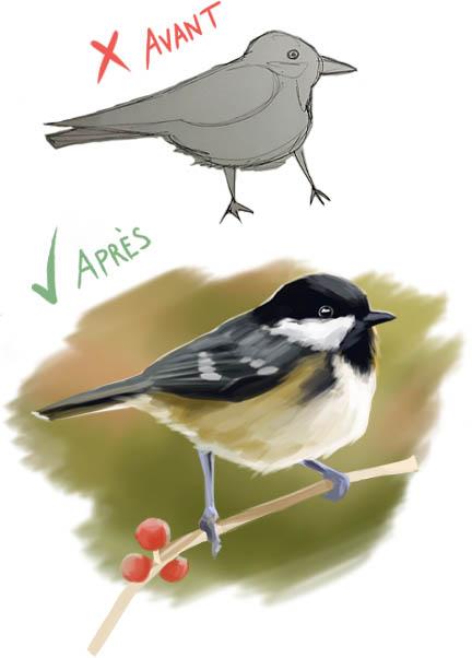 croquis d'oiseau avant après